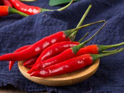 夏季辣椒种植技术