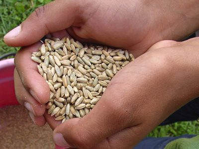 COVID-19:G20呼吁AMIS继续监控全球食品市场
